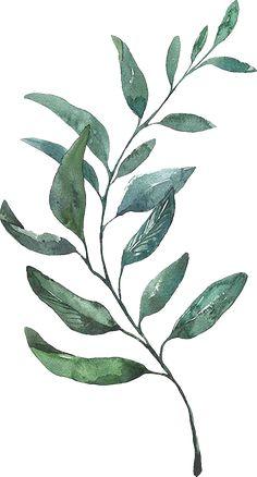 Watercolor Leaves, Watercolor Print, Watercolor Paintings, Botanical Drawings, Botanical Art, Mint Green Wallpaper Iphone, Art Sur Toile, Cherry Blossom Art, Blue Painting