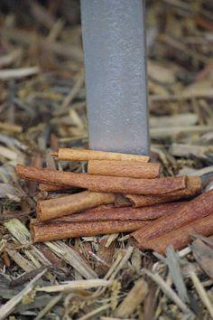Sprinkling cinnamon in a hive keeps ants away