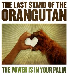 Last Stand of the Orangutan Join Orangutan Outreach and RAN! Tell the Snack Food 20: Don't Replace Trans Fats with Conflict Palm Oil