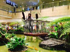 Sammy in Changi Airport, Singapore