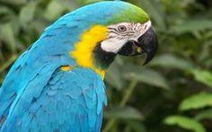 tapety, širokoúhlé, zvířata, papoušci, papoušek, tapety, modrá, ara, animalsfree, downloadfiles