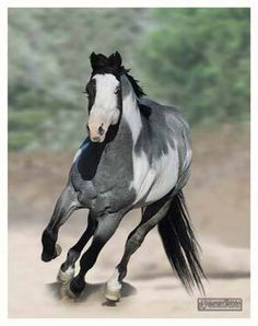 Love this horse's color                                                       …