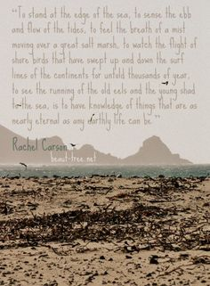 To stand at the edge of the sea. is to have knowledge of things that are as nearly eternal as any earthly life can be - Rachel Carson Nature Words, Nature Quotes, Ocean And Earth, Sea Quotes, Surf Line, Rachel Carson, Evil World, Spirit Quotes, Special Words