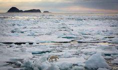 Kingdom of the Ice Bear