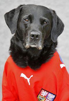 Tierische Fußball-WM: Labradore in National-Trikots | Kuriose Tierwelt