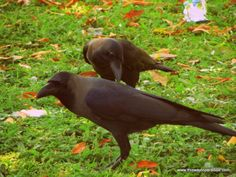 Scammed In Sri Lanka-Information You Need To Know Before You Go - This Way To Paradise-Beaches, Islands, And Travel Hawk Feathers, Crows, Sri Lanka, Paradise, Island, Beach, Travel, Animals, Ravens
