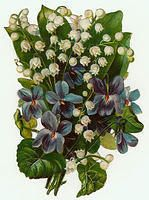 Flowers561. Lily of the Valley and Violets