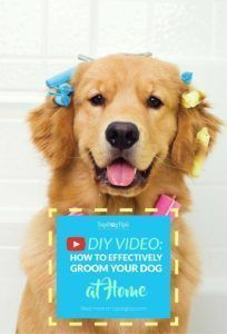dog grooming at home,care for your dog,fido,pet dogs Dog Grooming Salons, Dog Grooming Supplies, Pet Grooming, Pet Puppy, Pet Dogs, Pets, Doggies, Poodle Mix, Diy Stuffed Animals