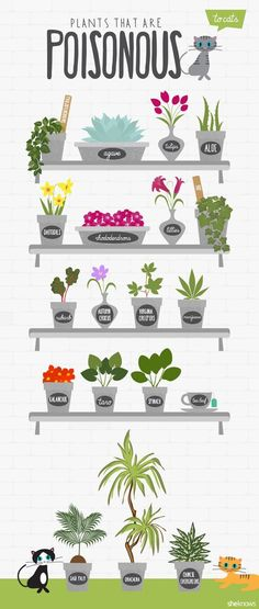 spiral-path: Witches, TAKE A LOOK AT THIS LIST!!As witches, we have plants everywhere… dried herbs, or growing houseplants. As children of nature we adore plants and house plants. However, be especially careful what you're exposing your beloved familiar to. Housecats do not have the same instincts as feral cats on what plants to stay away from. Most cats just LOVE plants - they'll dig in them, tip them over, go potty in them, and often times, eat them or use the leaves to clean their tee...
