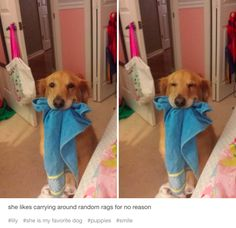 If you asked this dog who the president is, she would not be able to answer, because she is a dog. | 21 Dogs Who Have No Idea Who The President Is
