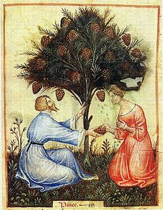 Harvesting pine cones, late 14th century, The Tacuinum of Paris