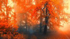 Tree Trees Autumn Nature