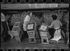 Girls packing fruit in the Fort Pierce packinghouse. Many of the employees are migratory laborers. Library of Congress Prints and Photographs Division. Grapes Of Wrath, Copy Print, Great Depression, Positive Images, Library Of Congress, Reading Room, Women In History, Digital Image