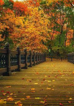 Autumn! ♡