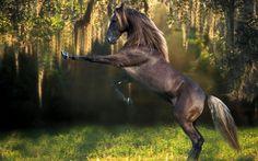 cavallo selvaggio wallpaper