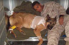 Perdió una pata pero no el corazón  Durante 8 años una perra llamada Lucca participó como soldado del ejercito de los Estados Unidos. Estaba entrenada para olfatear explosivos y proteger a su pelotón de estos. En el 2012 Lucca tuvo un accidente en medio de un bombardeo en Afganistán perdió una de sus patas y su vida corrió grave riesgo. Junto a ella se encontraba el soldado Juan Rodríguez su compañero y amigo de guerra. La explosión asegura Rodriguez fue inmensa. Él tuvo que correr para…