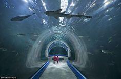 6,030-ton tank in the Aqua Planet Yeosu aquarium - the biggest in South Korea