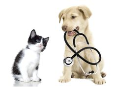 Get answer to different query related to your pet here. Just post your problem and get an expert advice. Post your problem here: https://myunikorn.com/forum/  #myunikorn #pethealth #petservice