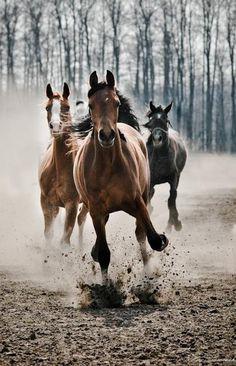 * * horses * *