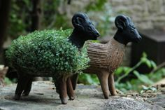 Grow Your Own Llama Cress Figure – SooFunky – Funky Gifts & Present Ideas Grow Your Own Mushrooms, Pet Sheep, Funky Gifts, Chia Pet, Llama Gifts, Arts Ed, Tumi, Ceramic Planters, Garden Projects