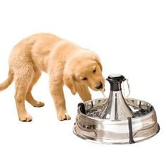 Stainless Steel Luxury Pet Water Fountain - Designer Dog Boutique ...