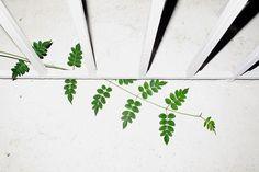 (2) Tumblr Color Photography, Plant Leaves, Herbs, Plants, Colour, Color, Herb, Plant, Colors
