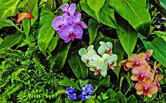 Orchideák Full HD Háttérkép megtekintése