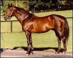 Mr. Prospector - the son of Raise A Native who was purchased for $200,000 in 1971. He did not run the KY Derby against Secretariat, but set a few track records of his own. He and his grandson, Unbridled, share the unique distinction of having sired a son who won each Triple Crown race. His were Fusaichi Pegasus, Tank's Prospect, and Conquistador Cielo. I know him, of course, as the sire of Encore's damsire, Allens Prospect, who sired some quite lovely jumpers of his own.