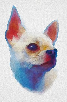 Nappi the chihuahua by Annukka Leppänen (Digital watercolor in Photoshop)