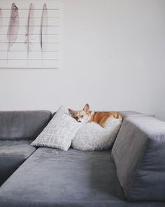 """corgi- """"No, Thursday's out? How about never---is never good for you? The New Yorker Cartoon (Mankoof)"""