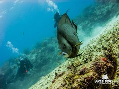 Friend and Dive Instructor Elia Zane took me out for two beautiful dives. These are his pictures. #freewayscubadving #eliazane #tourguidekay #tourguide #playadelcarmen #tulum #cancun #traveltips #privatetours #mexico #privatetourguide #diving