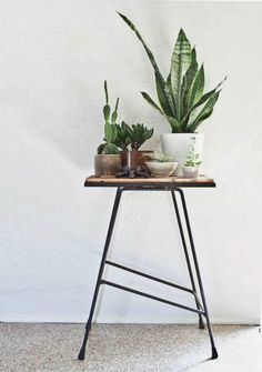 indoor plant ideas, easy indoor plants for the plant killer, wire plant holder