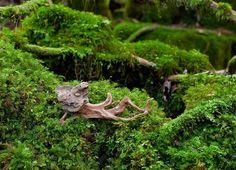 流木の魂 森に帰る-8  ★   #流木 #流木アート #屋久島アート #インテリア  #流木オブジェ #Driftwood Art #Interior