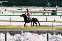 2014.02.10 Tokyo Race Course  photo by teitania