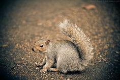 Cute Squirrels | Cute squirrels in London