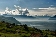 Lavaux - Le lac Léman et les Alpes / Geneva lake and the Alps Cool Places To Visit, Places To Go, Rivage, Work Abroad, Morning View, Lake Geneva, Cool Countries, Round Trip, Amazing Destinations