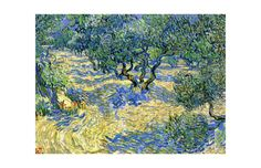 Olive Orchard, c.1889 Giclee Print by Vincent van Gogh at Art.com