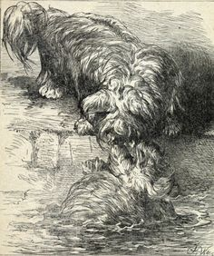 DOG Skye Terrier Saves Drowning Companion, Antique Harrison Weir Print 1890s