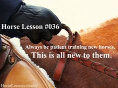 """""""Always be patient training new horses. This is all new to them."""""""