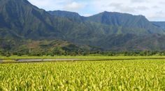 Center for Food Safety | News Room | Standing up to Corporate Bullies: Kauai Community Moves to Defend County's Pesticide Disclosure Law