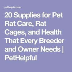 20 Supplies for Pet Rat Care, Rat Cages, and Health That Every Breeder and Owner Needs | PetHelpful