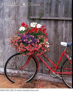 Image detail for -Bicycle with flower leaning against garden shed. Anacortes. Fidalgo ...