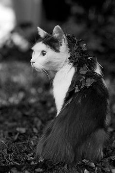 Die Katze von heute trägt einen Mantel aus Blättern! #Katze #Foto