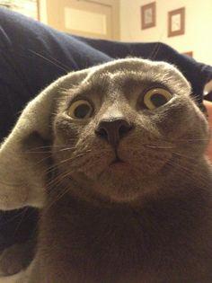 Cat+ sock= this