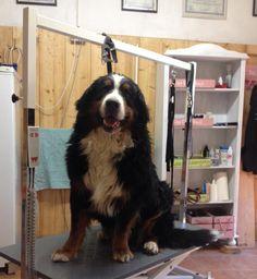 Am Doolittlehof - Fellness Dogs, Animals, Living Room, Nursing Care, Animales, Animaux, Pet Dogs, Doggies, Animal