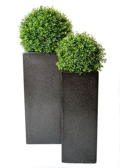 Boxwood Balls In Tall Modern Planters These Topiary Trees