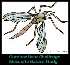 Outdoor Hour Challenge Summer Mosquito Nature Study
