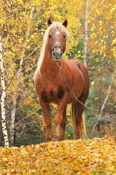 Horse in Awesome Autumn Photo