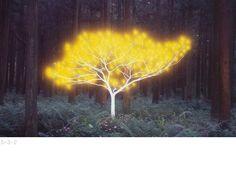 tree of life C-type Print