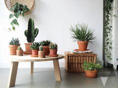 Mooi: Planten groeperen; Woood salontafel, lichtgrijze egale vloer, Scindapsus Pictus plantje - fotografie & styling door Lisanne van de Klift